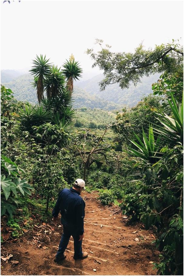 farma, regiony kawowe, Gwatemapa
