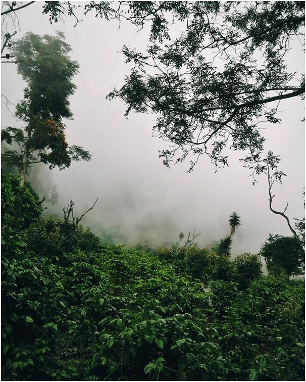 Gwatemala, regiony kawowe, farma