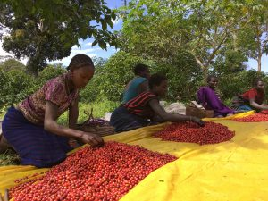 Coffee regions: Ethiopia