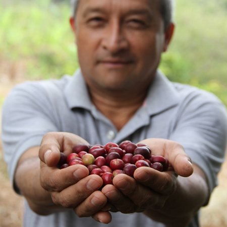 The Barn - Colombia Cauca Julian Palomino Espresso 1kg