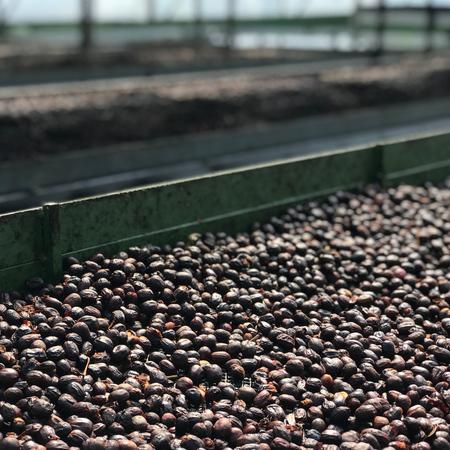 Savage Coffees Panama Volcan Fusion Geisha Anaerobic Natural FIL 200g, kawa ziarnista (outlet)
