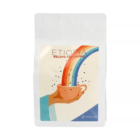 COFFEE PLANT - Etiopia Beloya Anaerobic Filter