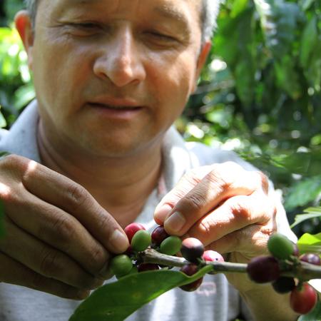 The Barn Colombia Cauca Julian Palomino Washed ESP 250g, kawa ziarnista (outlet)
