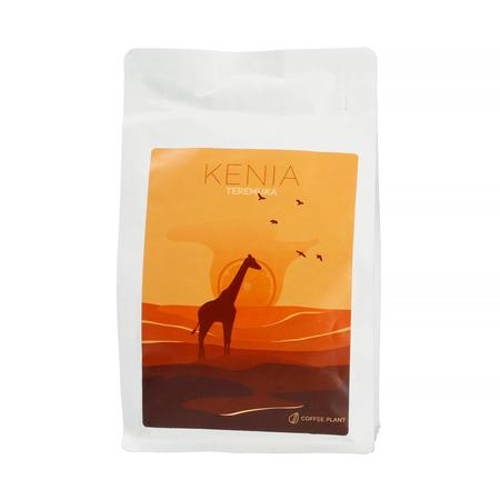 COFFEE PLANT - Kenia Teremuka Filter